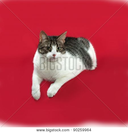 Tabby And White Cat Lies On Red