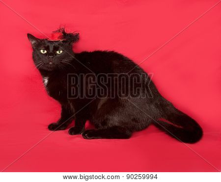 Black Cat In Red Hat Is On Red