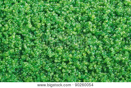 green tobiko