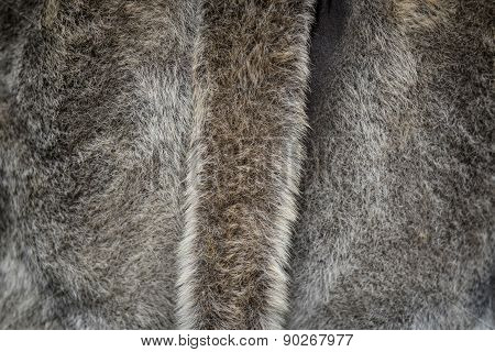 Fur Background With A Tail