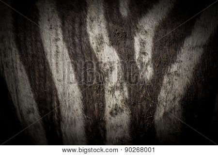 Zebra Skin Dark Background
