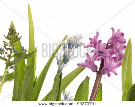Bright Spring Flowers And Succulent Leaves