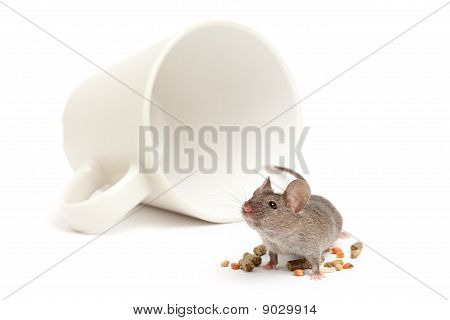 Mouse Cup And Food Isolated