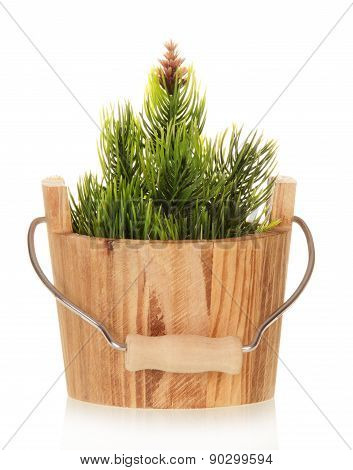 Small Christmas tree in bucket