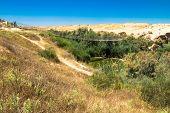 image of suspension  - Suspension bridge and Besor Brook in Eshkol National Park Negev desert - JPG