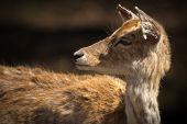 image of deer head  - Close - JPG