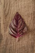 picture of basil leaves  - Red basil fresh leaves on wooden background - JPG