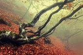 stock photo of fog  - Trail through a mysterious dark old forest in fog - JPG