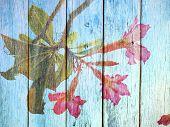 foto of desert-rose  - Desert Rose Flower on Wood texture background - JPG