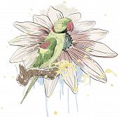 pic of parrots  - Vector sketch of a parrot with flower - JPG