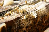 pic of beehive  - Beekeeping at Vietnam Vietnamese agriculture group of bee tank group of beehive in Dalat jungle honey is nutrition eating bee working at bee nest - JPG