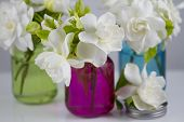 image of gardenia  - Bouquet of fresh White Gardenias placed in small red green and blue mason jars on white or black background as a decoration for a table - JPG