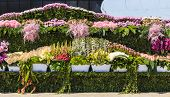 foto of flower pot  - Pots of flowers on holiday flowers in Baku - JPG