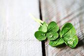 stock photo of clover  - Green clover leaves on wooden background - JPG