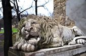 image of stone sculpture  - Powerfull sculpture of stone lion in Lviv - JPG