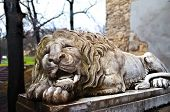 stock photo of stone sculpture  - Powerfull sculpture of stone lion in Lviv - JPG