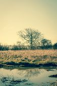 stock photo of lonely  - Lonely tree by the water in autumn - JPG