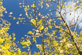 pic of october  - Plum tree at Fall - JPG