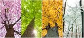 pic of seasonal  - close up four seasons in the treetops - JPG