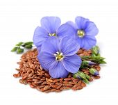 image of flax plant  - Flax seeds with flowers close up on white - JPG