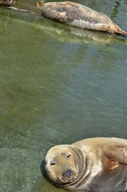 image of aquatic animals  - animal - JPG