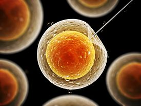 pic of zygote  - Cell injection  - JPG