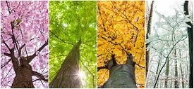 picture of four  - close up four seasons in the treetops - JPG