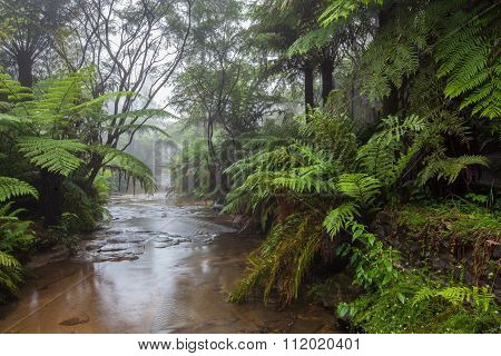 Creek Flowing Through A Rainforest In The Morning Mist