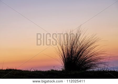 Beach Grass Silhouette At Sunset