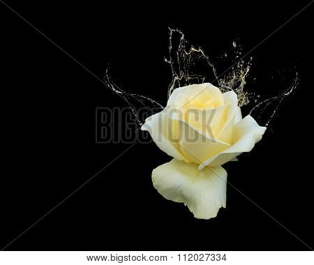 Beautiful Yellow Rose With Water Splashes