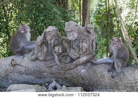 Monkeys Sitting In Ubud Sacred Monkey Forest On   Bali