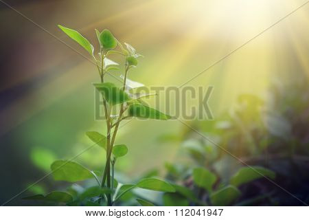 Light Shining On A Green Sprout