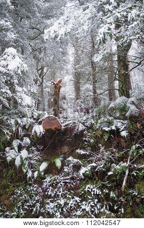 Heavy Snowfall In Eucalyptus Forest In Australia
