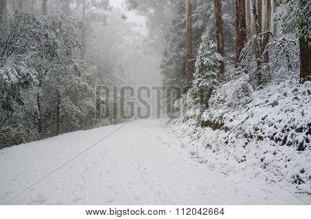 Heavy Snowfall On Mountain Road Winding In Eucalyptus Forest, Australia