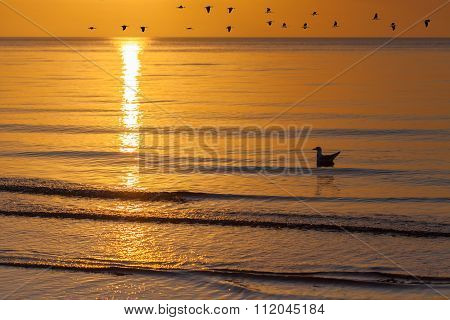 Lonely Seagull Floating On Sea Waves During Golden Sunset With Flock Of Geese Flying In Orange Sky