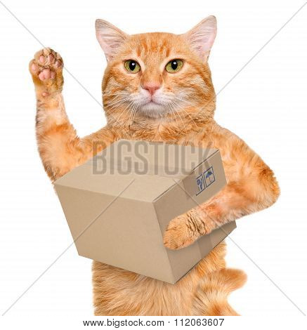Cat delivery post box