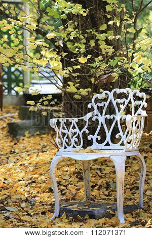 A chair under the ginkgo tree