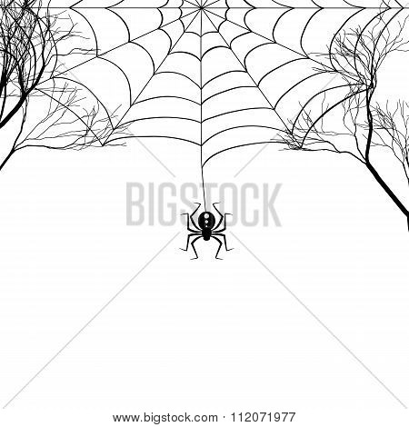Cobweb between tree branches and a small spider on a white background.