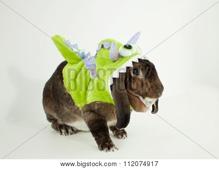 Monster Bunny