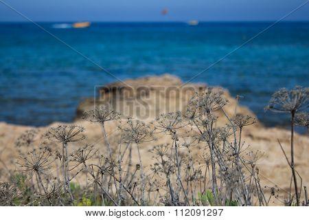 Mediterranean Sea Coastline, Cyprus.