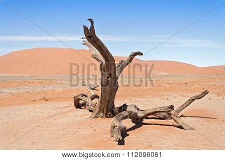 Dead tree in Sossusvlei, Namibia