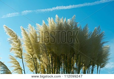 Withered Grass In The Sunlight Against  Sky