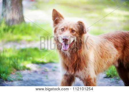 Portrait of a happy stray dog playing outdoors.