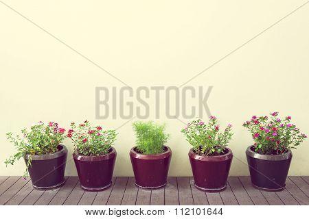 Flowers in flowerpots on wood floor with blank wall vintage style.