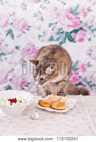 The Cat Eats Breakfast. Cookies, Cottage Cheese And Milk. Country Breakfast On The Table. Cat Thief.