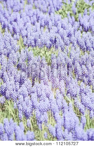 background vertical purple flowers with green grass