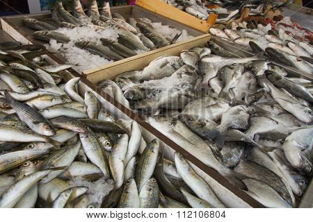 Mediterranean Fish at the Market
