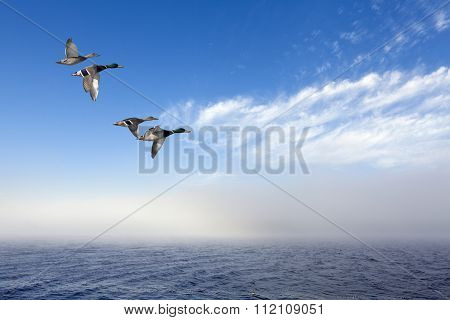 A flock of mallards in migration.