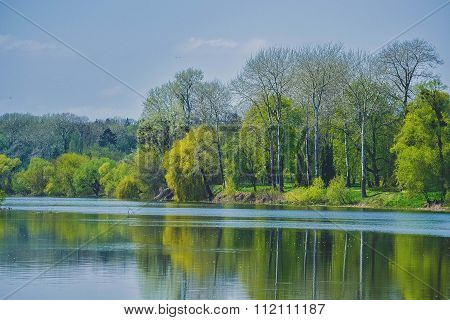 Trees with spring foliage on the river bank