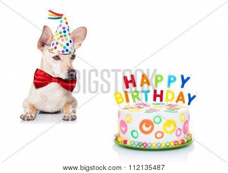Birthday Cake Dog